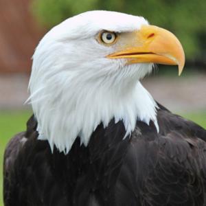 Eagle Insurance Solutions, LLC